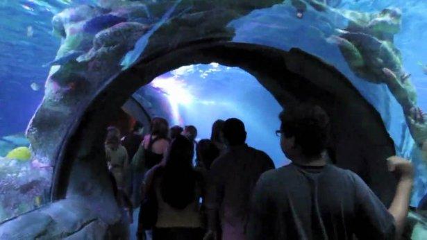アリゾナミルズ(Arizona Mills)600の水族館